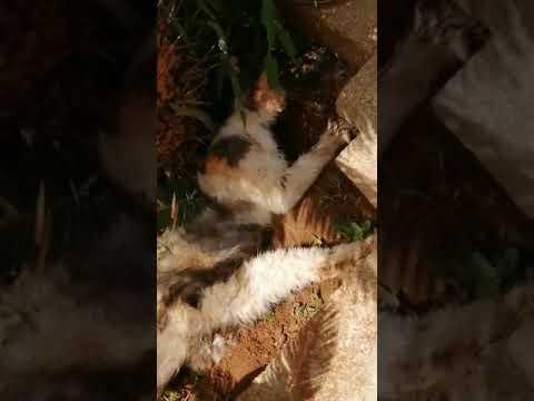"""Salento, strage di gatti: """"Danno fastidio ai clienti"""". Denunciata titolare di agriturismo"""