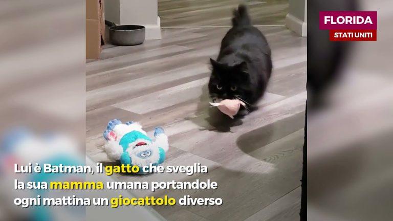 """Gattino sveglia la sua """"mamma"""" con un giocattolo diverso ogni mattina: la storia è dolcissima"""